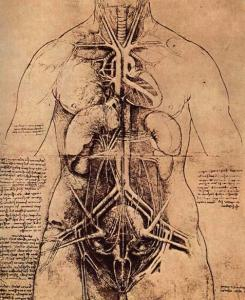 Leonardo da VInci, The principal organs and vascular and urino-genital systems of a woman